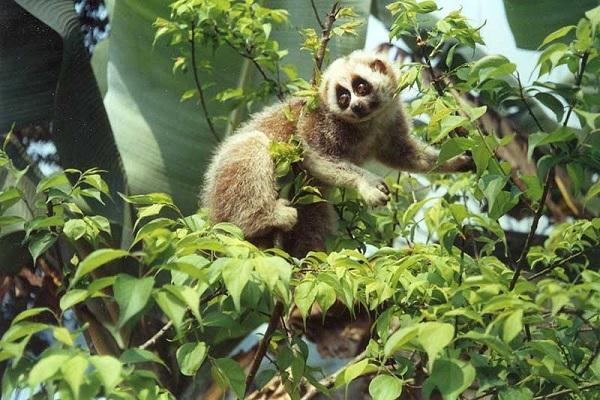 Những chú khỉ tinh nghịch sống ở vườn quốc gia